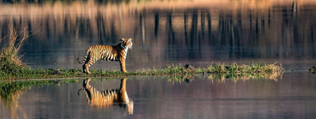 Top 5 National Parks in Rajasthan