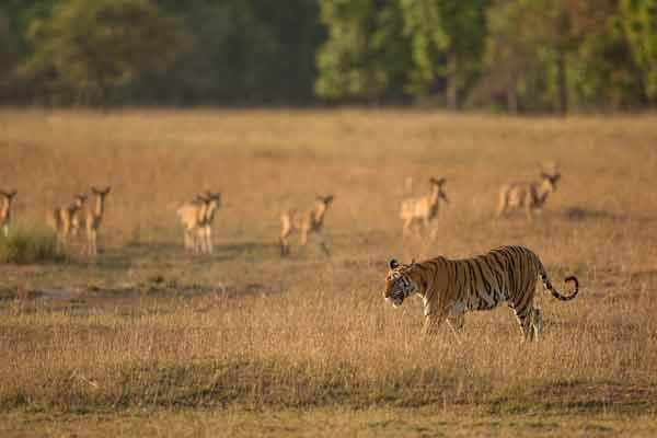 Bandhavgarh Photographic Tour